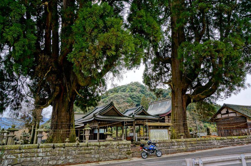 22 藤群神社の大杉.JPG