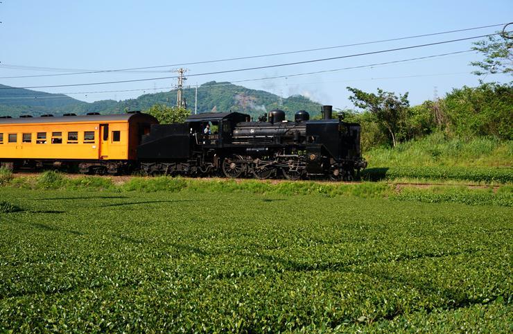 61 茶畑とSL.JPG