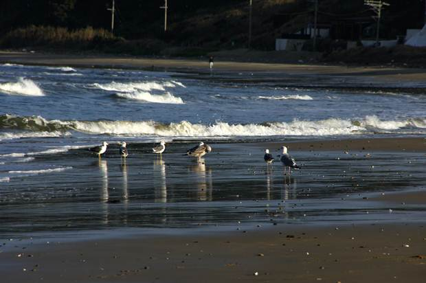 冬の海の光景.JPG