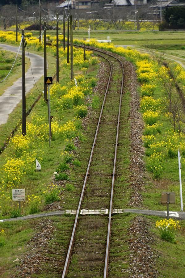 春の風景.JPG