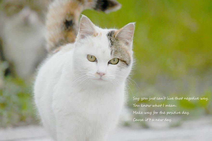 猫散歩2.jpg