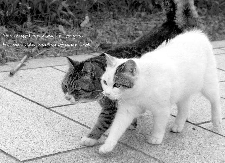 猫散歩3.jpg