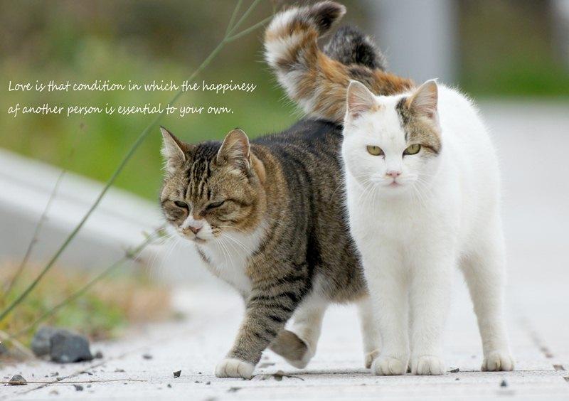 猫散歩4.jpg