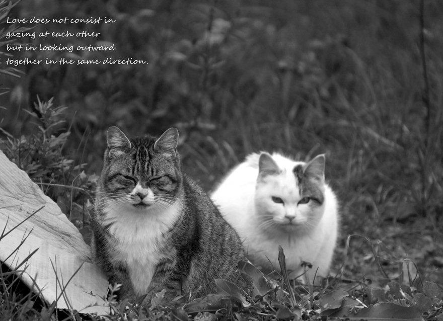 猫散歩1.jpg